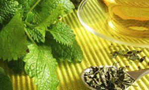 Os benefícios do chá de melissa para sua saúde - Conheça
