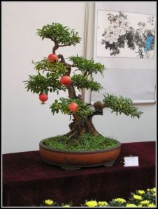 plantas ideias para bonsais